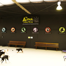 The Alpha Canine Group - inside signage